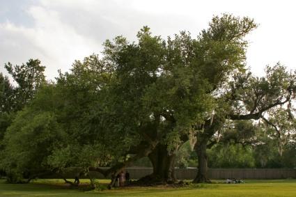Tree of Life oak wedding celebration