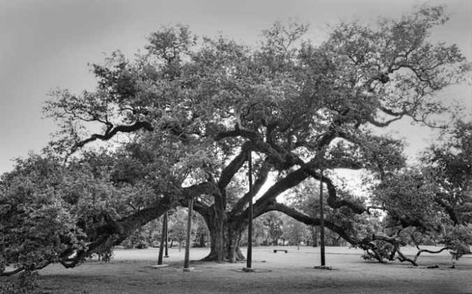 McDonogh Oak, City Park, New Orleans