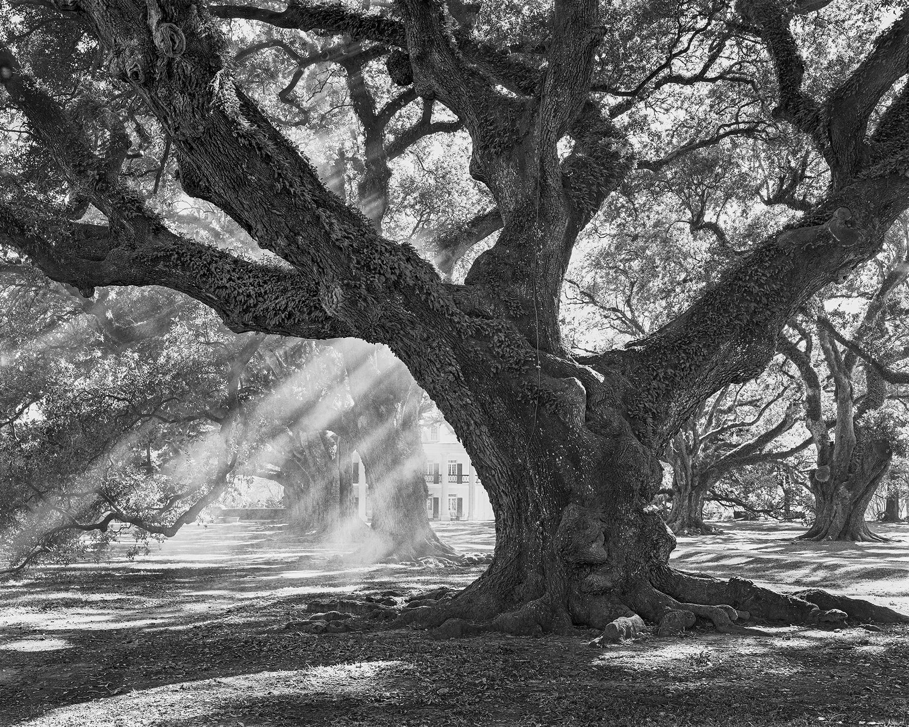 Andrew oak afternoon light 10x8-Edit