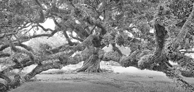 Baccas oak diptich_8x17_BRN
