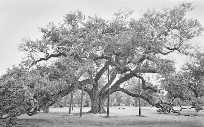 McDonough Oak adj