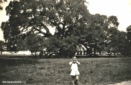 Locke-Breaux Oak Circa 1940
