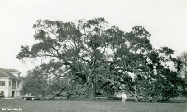 Locke-Breaux Oak circa 1956_72