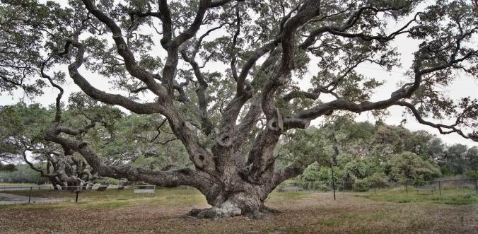 Goose Island Oak 1