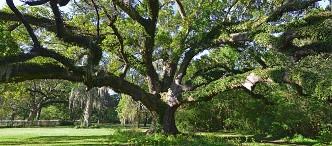 Gabriel Oak, panoramic view