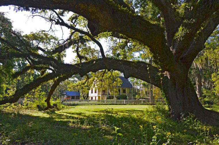 Gabriel Oak, view toward Maison Olivier Creole cottage