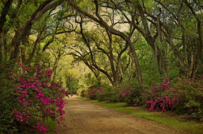Afton Villa oak alley and azaleas