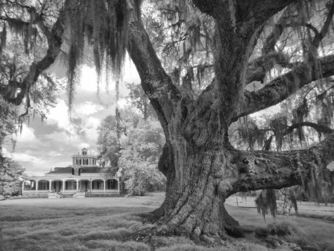 Cleveland Oak and Jefferson home, Jefferson Island