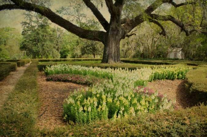 Oak-in-gardens-Afton-Villa