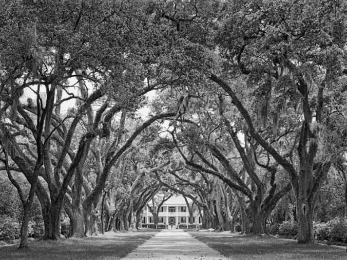 Rosedown oak alley, center view