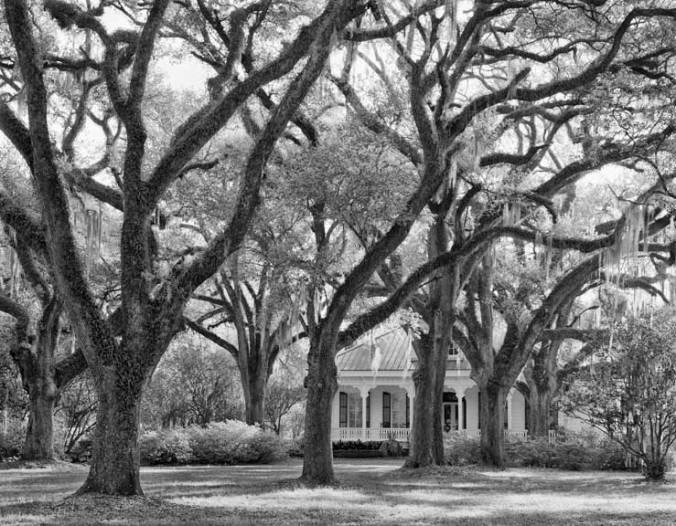 The Oaks Plantation, oaks and house