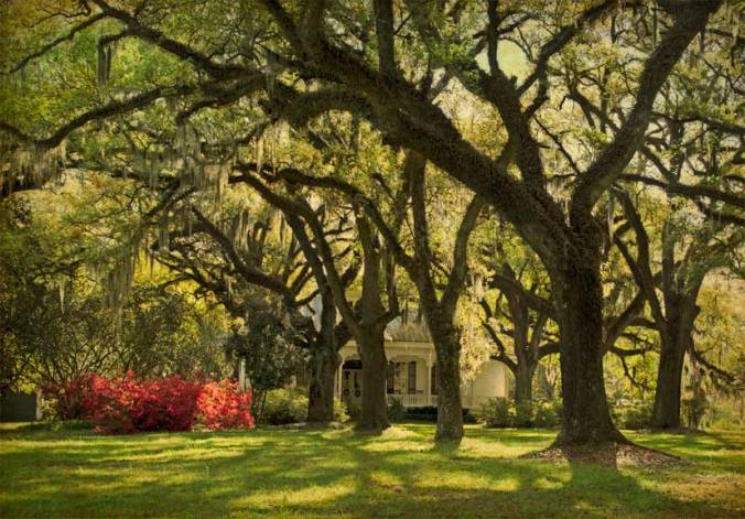 The Oaks Plantation oak alley and home