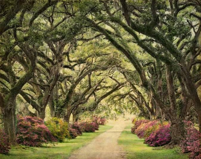 The_Oaks_Plantation_Alley_blog_color-2