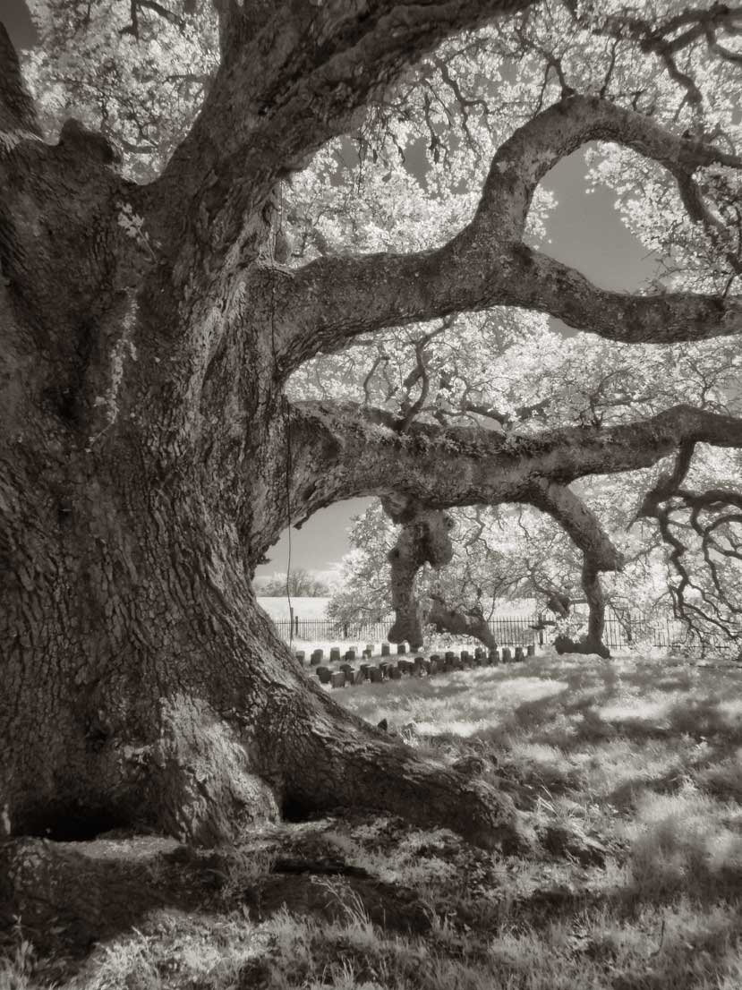 Lone-Oak-and-graves-2