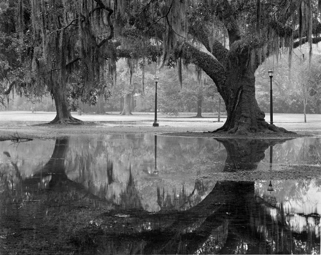 2oaks-and-reflection_Audubon-copy