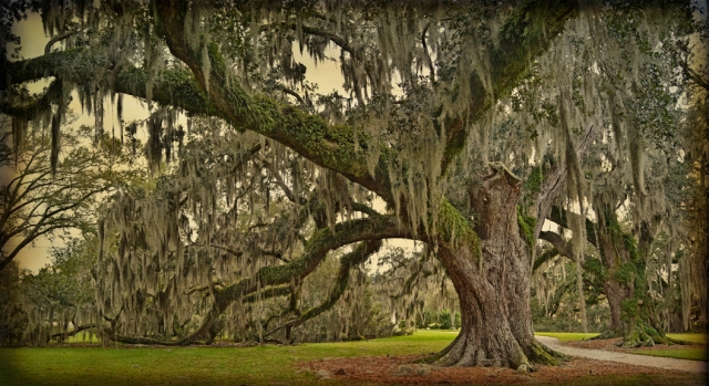 Two oaks entry road study 6 copy