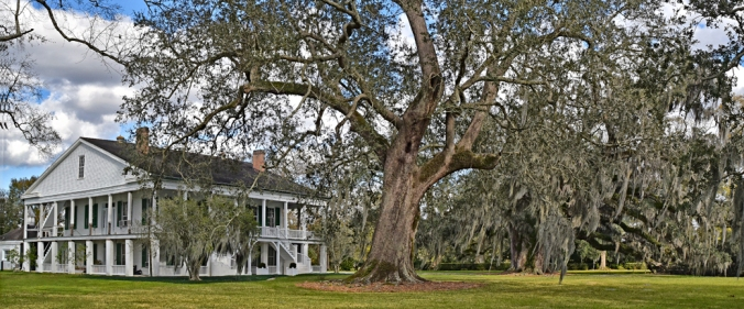 rienzi-house-and-oaks-west-corner
