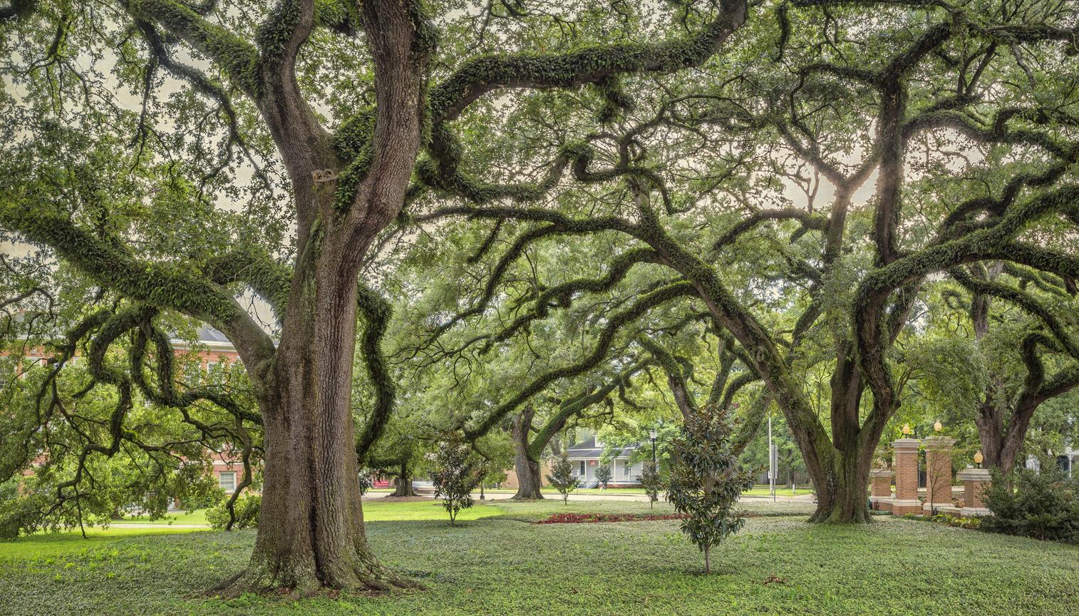 20th century oaks 1a copy